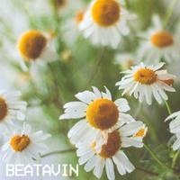 beatavin - Chamomile